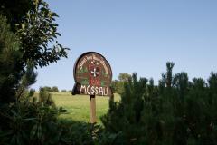 mossautal-100_15