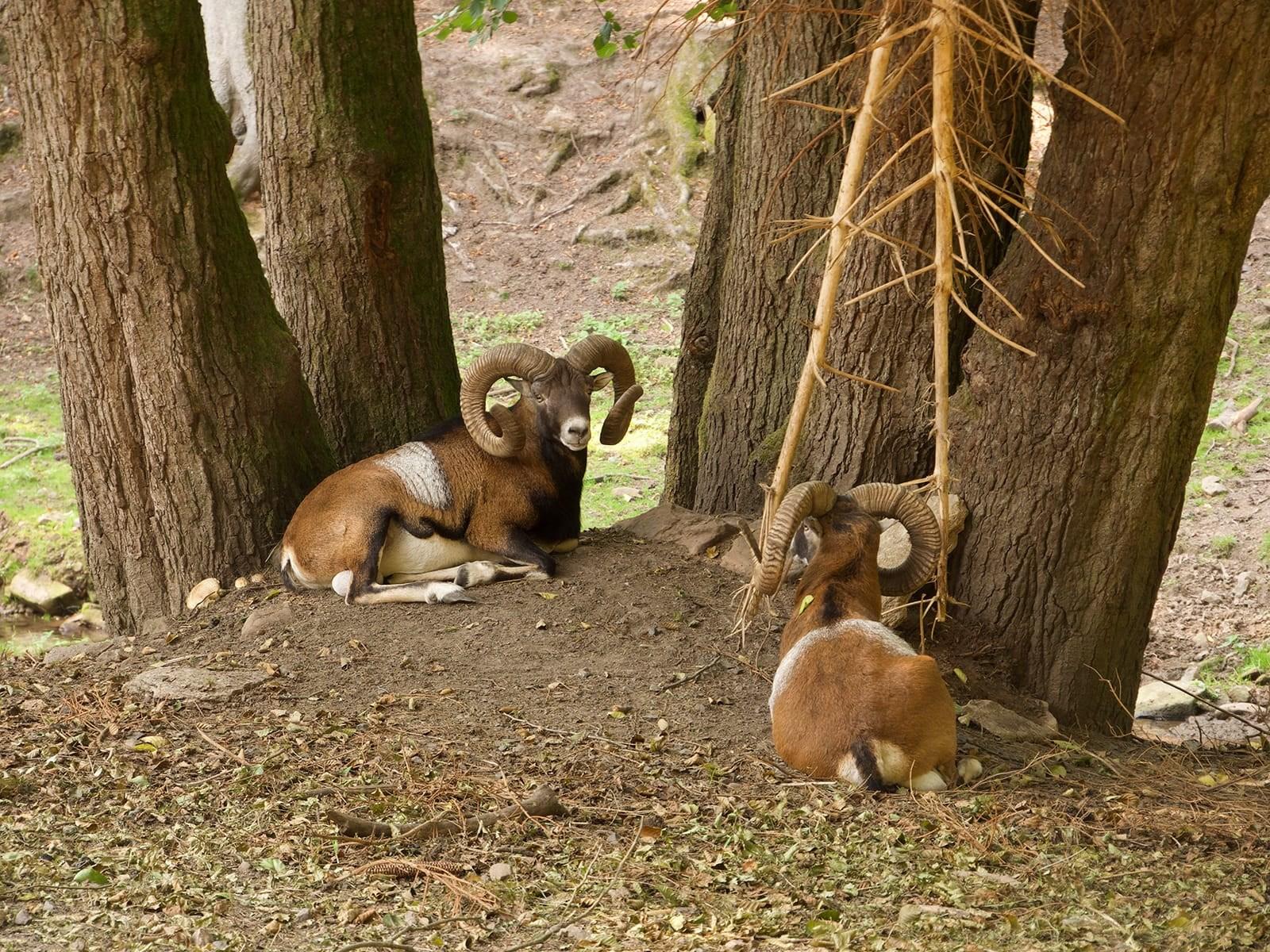 wildpark-brundergrund_4